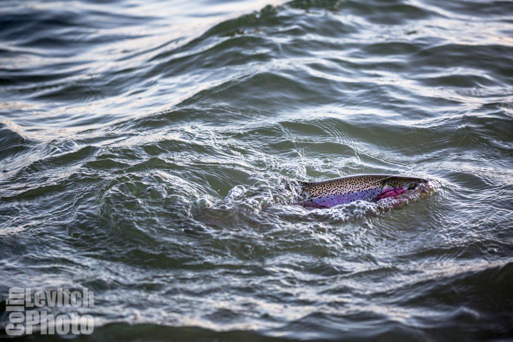 20150801-2817-ThompsonDam-FlyFish-CLevitch